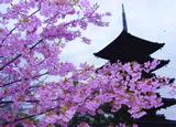 「春の訪れ」  愛知県 山川佳恵 様